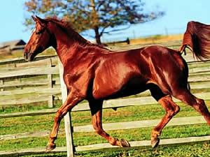 Horse Jigsaw 3
